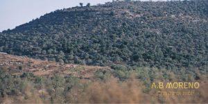 א.ב מוראנו הפוטנציאל של קרקע חקלאית
