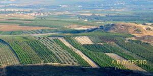 א.ב מוראנו קרקעות למכירה מימוש קרקע בשינוי ייעוד באזורי ביקוש בשרון ובמרכז הארץ