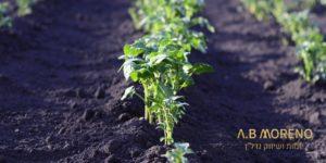 א.ב מוראנו קרקעות למכירה סיכויי ההפשרה של קרקע להשקעה באזורים שונים בישראל