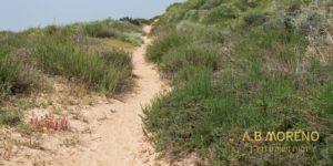 א.ב מוראנו קרקעות למכירה קרקעות בסמוך לרצועת חוף הים חדרה