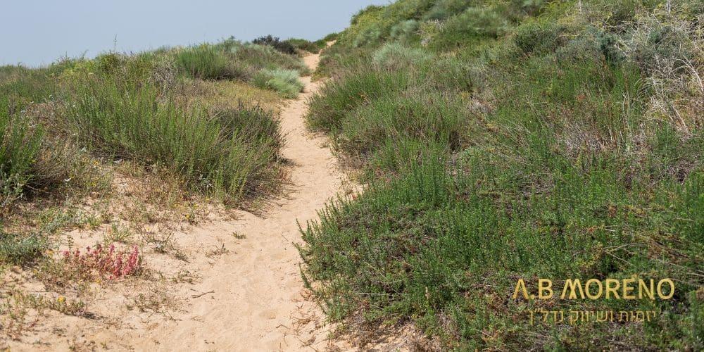 קרקעות בסמוך לרצועת חוף הים – חדרה