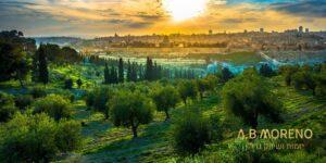 א.ב מוראנו קרקעות למכירה קרקעות ישראל