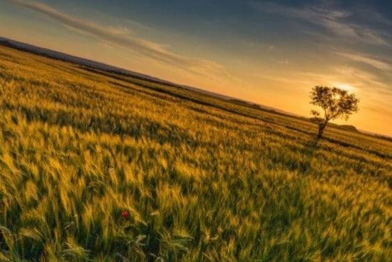 <h3>היתרונות והחסרונות של מגרש חקלאי למכירה בשפלה</h3>