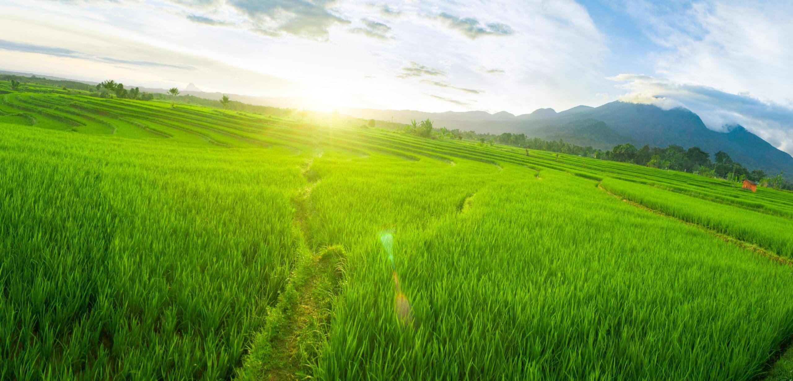 <h3>מדוע לרכוש קרקע חקלאית למכירה?</h3>