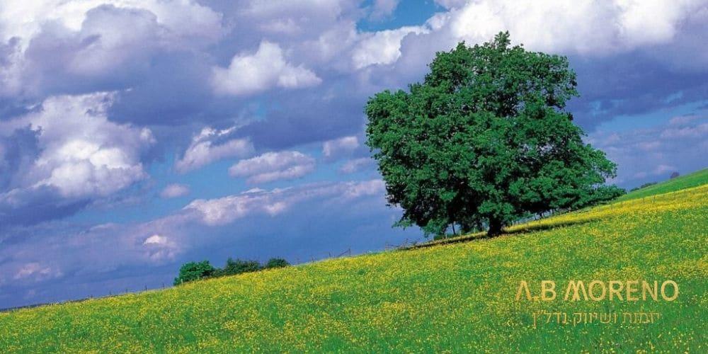 קרקע מופשרת למכירה – הזדמנות חד פעמית