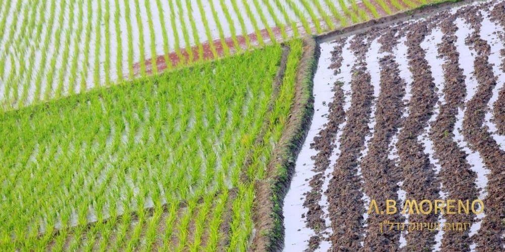 רכישת קרקע חקלאית להשקעה