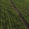 <h3>איך מבצעים בדיקת קרקע חקלאית?</h3>
