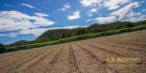 מגרשים חקלאיים למכירה א.ב מוראנו קרקעות למכירה