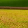 <h3>התשואות האפשריות על מגרשים חקלאיים למכירה</h3>