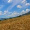 <h3>רכישת קרקע חקלאית – הסכנות שצריך לקחת בחשבון</h3>