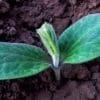 <h3>רכישת קרקע חקלאית להשקעה – שווה או לא שווה?</h3>