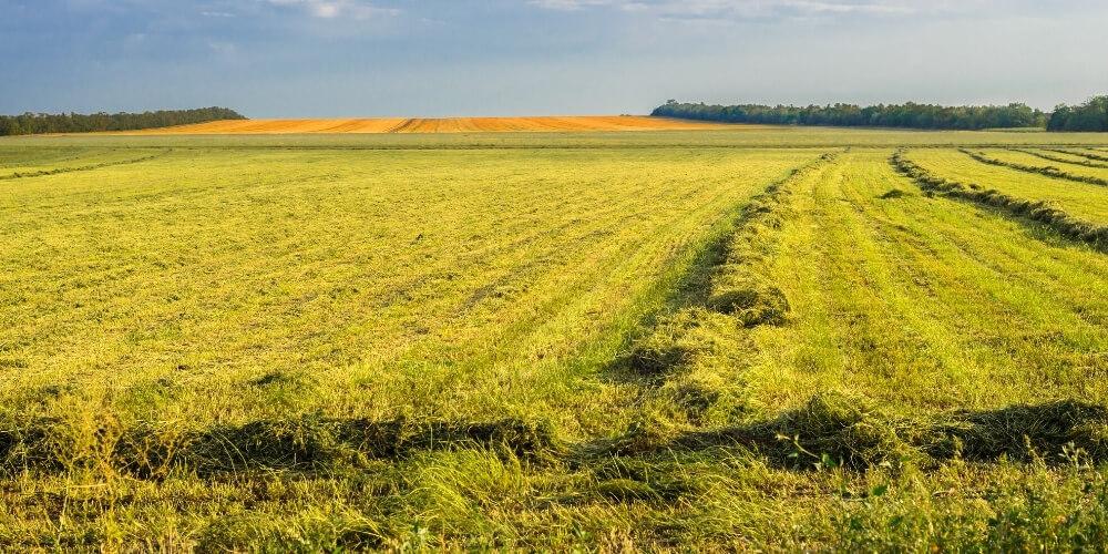 זכויות בקרקע חקלאית